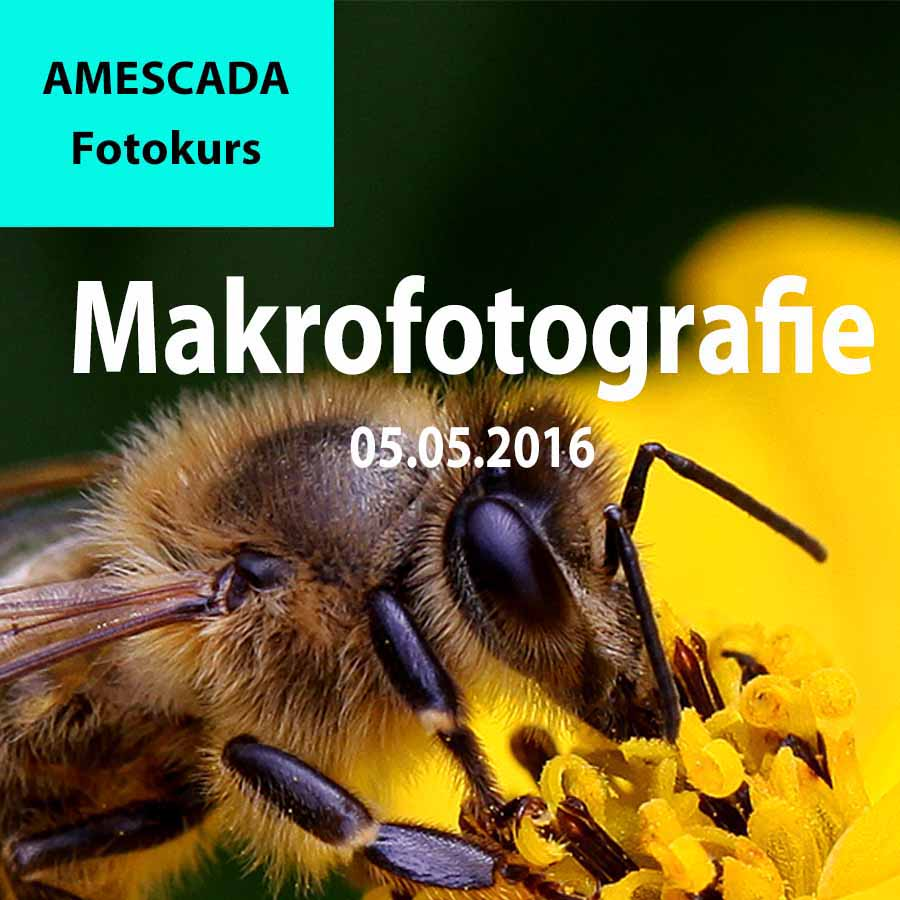 FOTOkurs Makrofotografie. Fotoworkshop Makrofotografie Nahaufnah